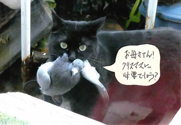久世家のネコ達・・・ミミちゃんサムネイル