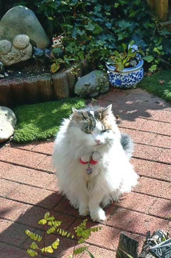 久世家のネコ達・・・リナちゃんサムネイル