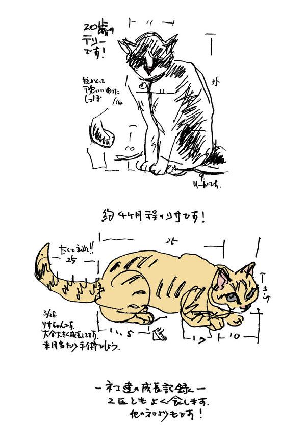 ネコ達の成長記録サムネイル